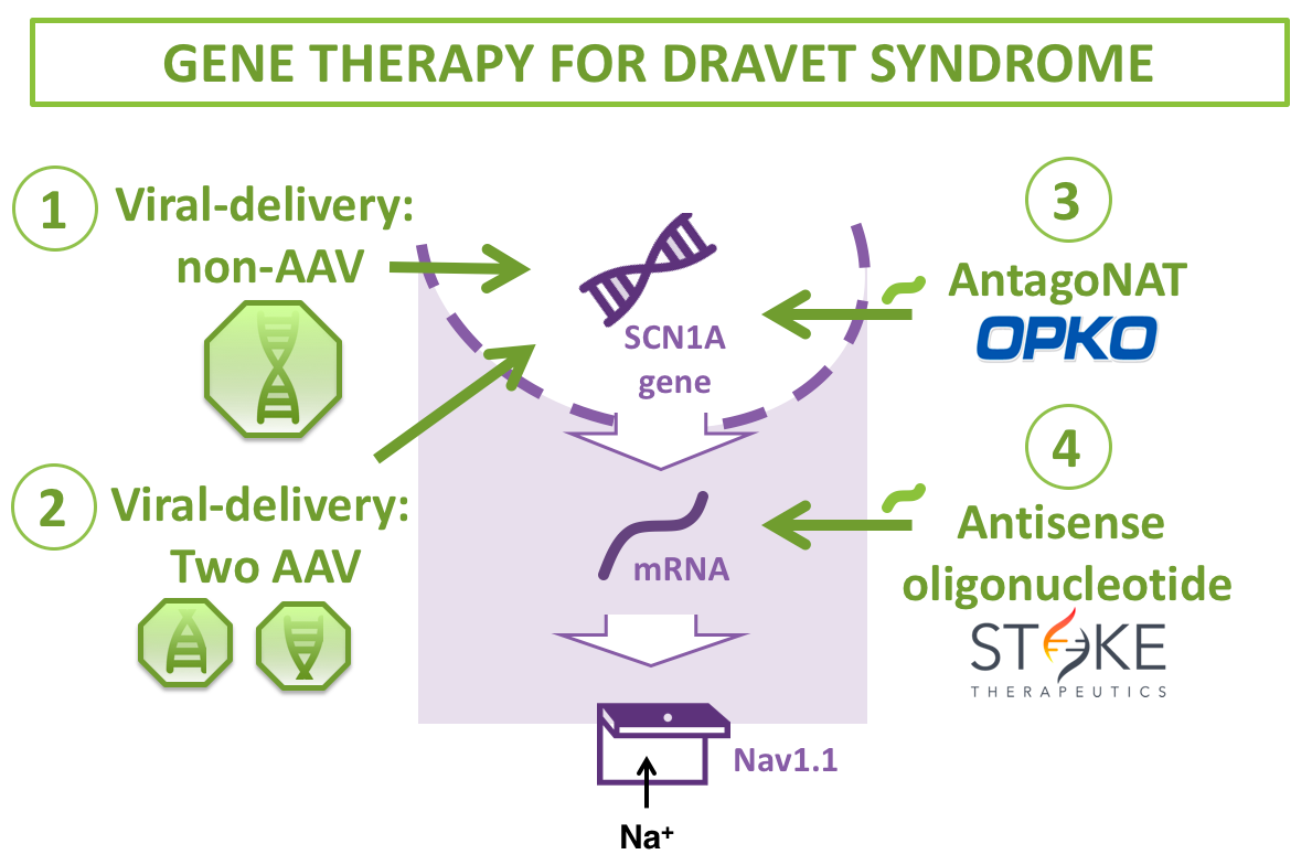 dravet syndrome gene therapy