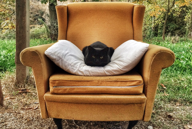 Black cat on a yellow sofa in the Tuscan countryside