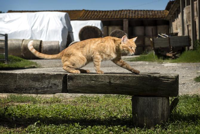 Barbialla-Nuova-cats-Pino