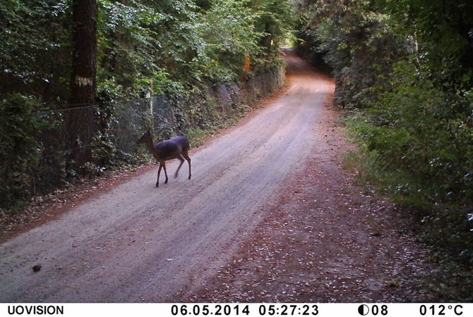 Barbialla-Nuova-Bambi