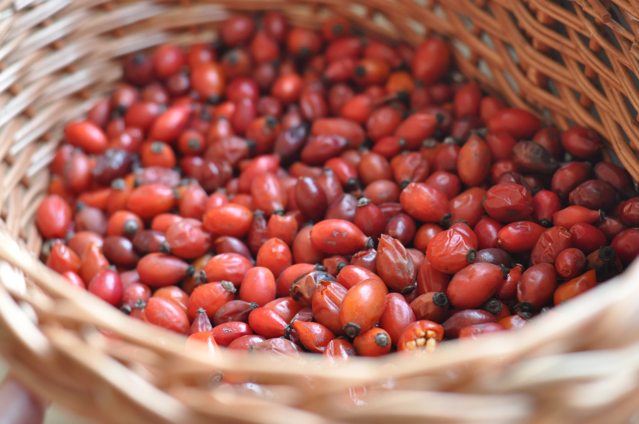 A basket full of rose hips collected in Fattoria Barbialla Nuova. Recipe of rose hips jam.
