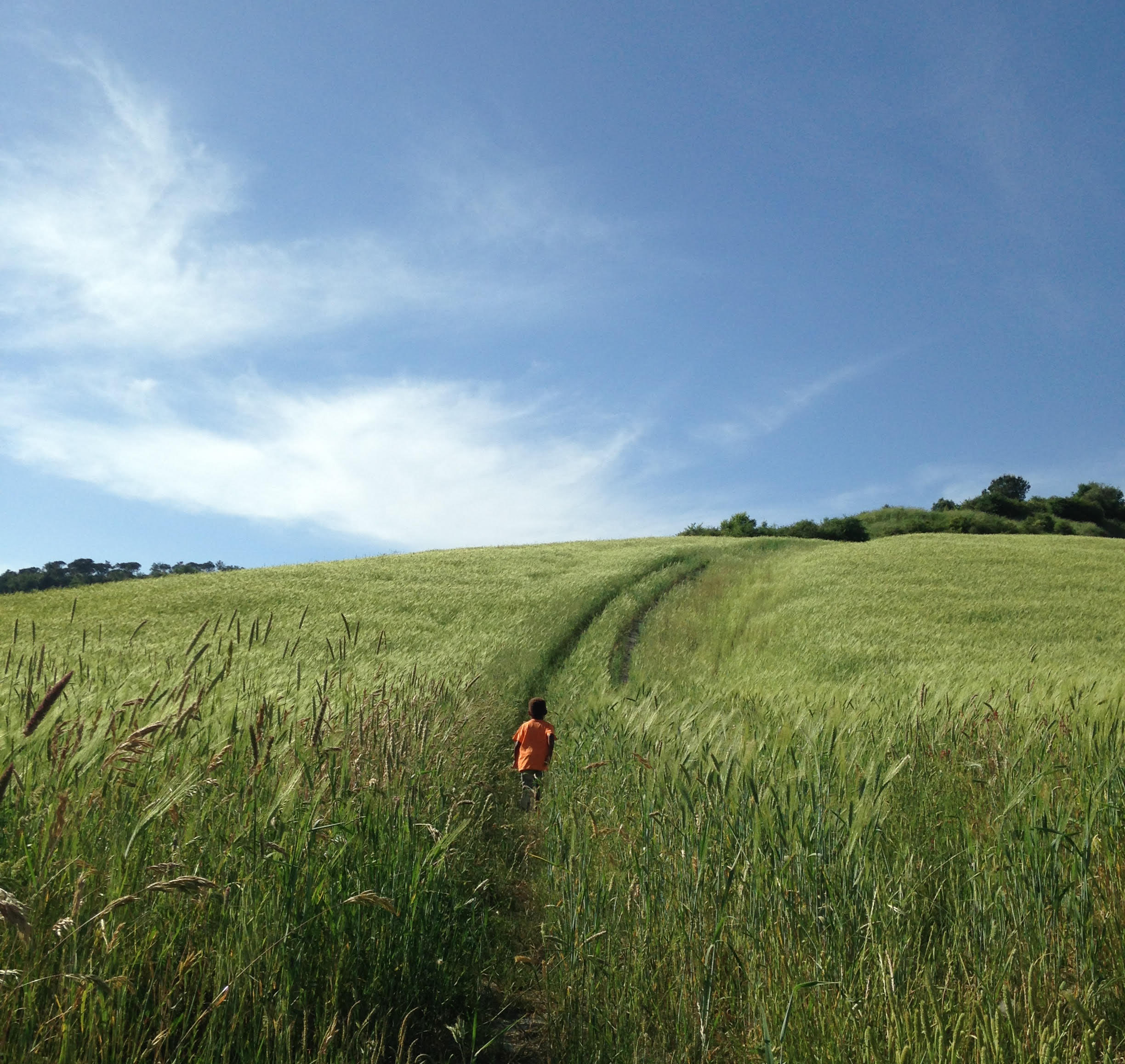 A child walking in the fields in Tuscany
