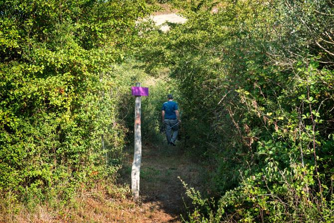 Guest walking on purple trail in the property of Fattoria Barbialla Nuova
