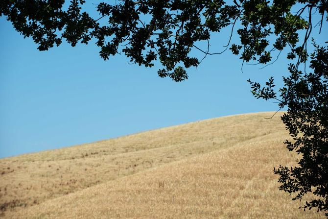 Fattoria-Barbialla-Nuova-wheat