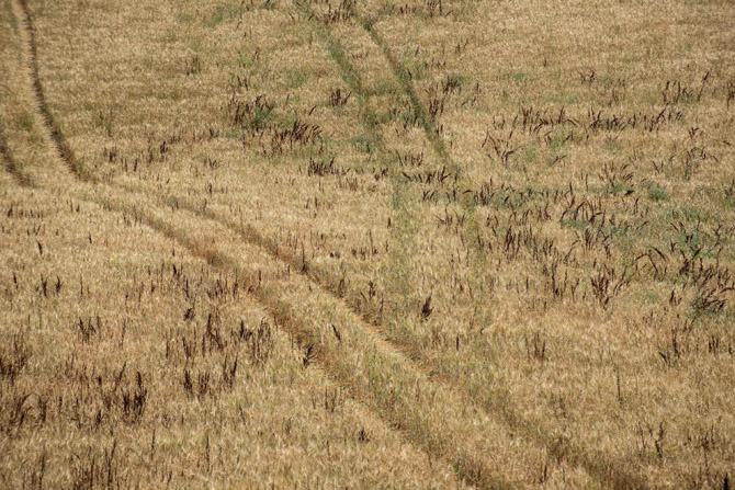 Barbialla-Nuova-organic-crops