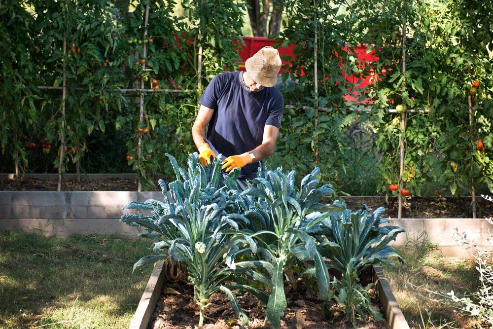 Veggoe garden 1.jpg