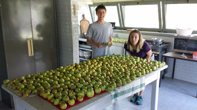 A huge amount of apples to prepare the very famous apple & cinnamon jam of Barbialla Nuova