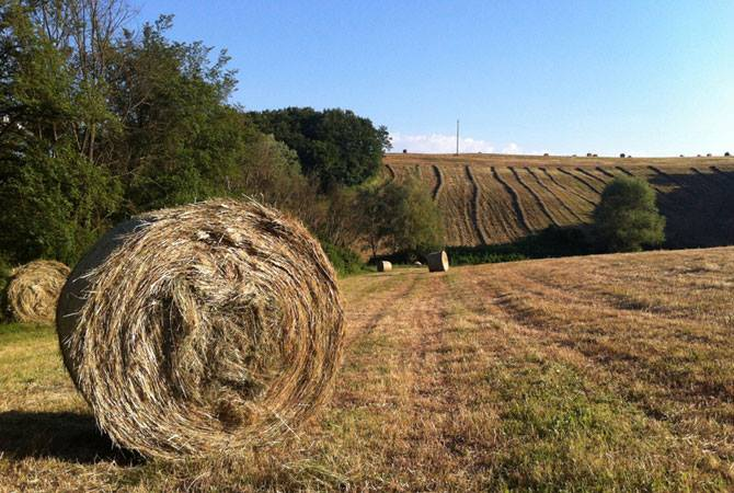 Organic fields, summer in Tuscany, hay