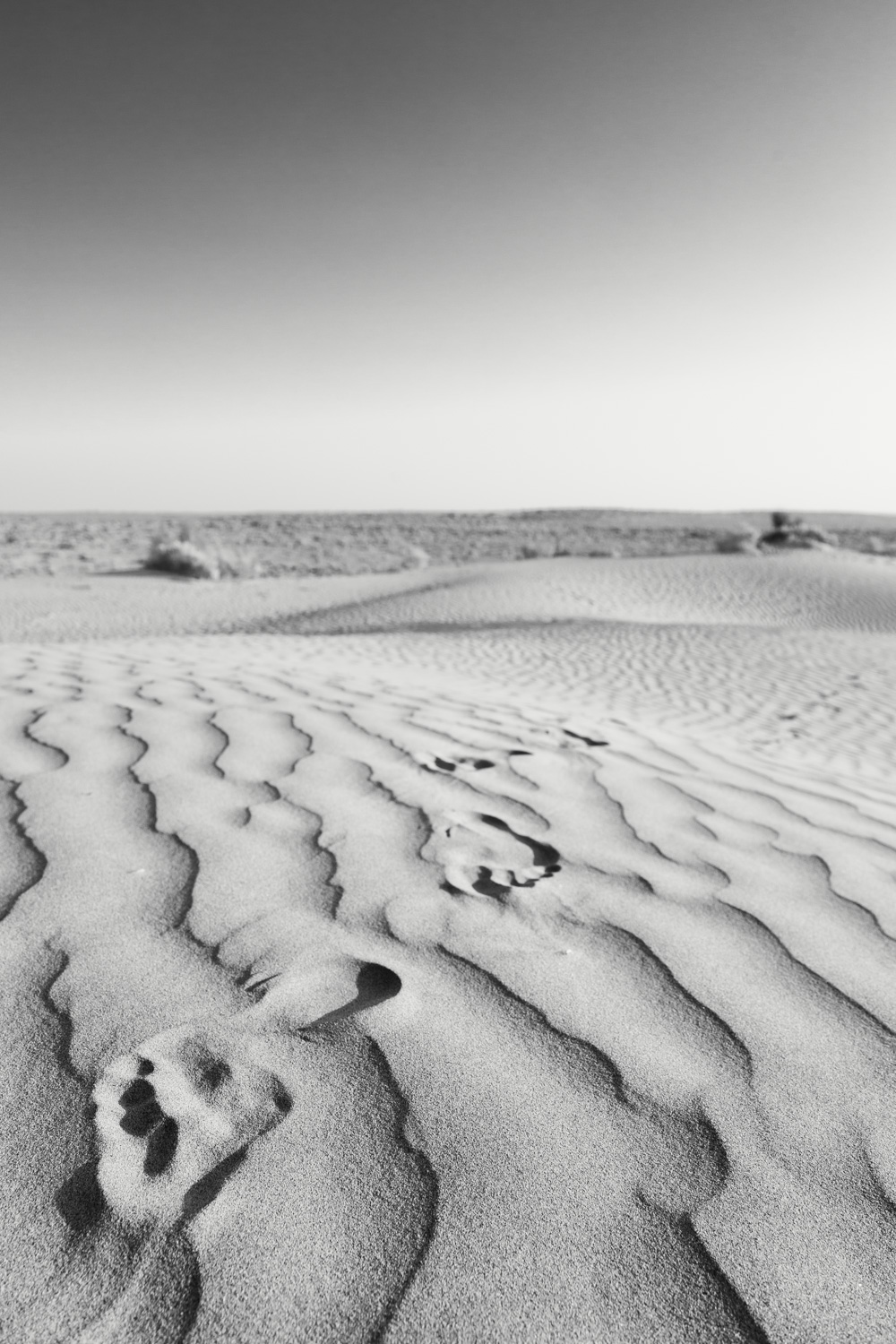 I took this picture in the Thar Desert in Rajasthan (India). In this collection it's the one picture where traveling is the main topic. It's about earth and the mark we leave with every step on our journey.