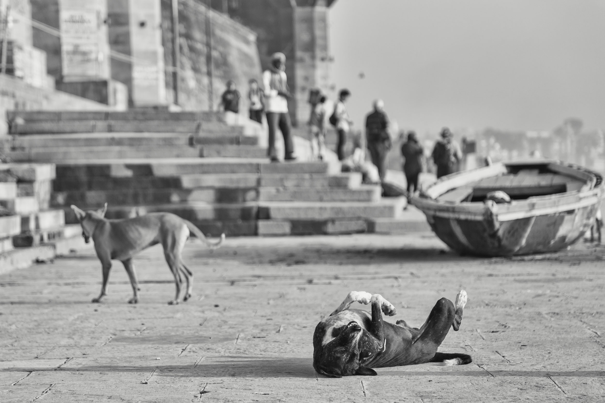 Dogs in Varanasi India Reportage Photography
