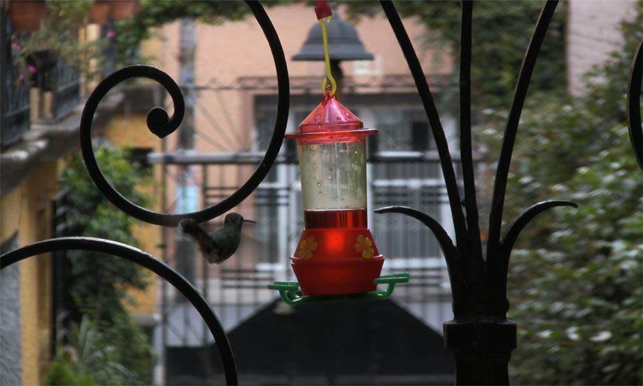 jaki_irvine_hummingbird_lrg.jpg