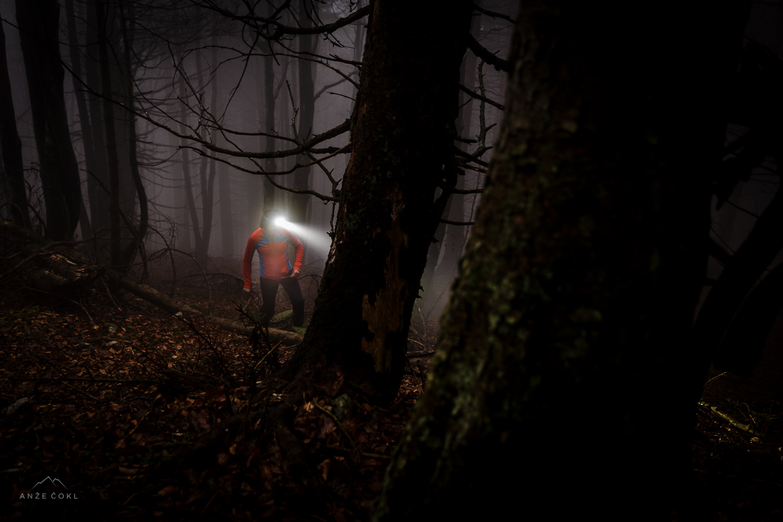 Iskanje gozdnih vil
