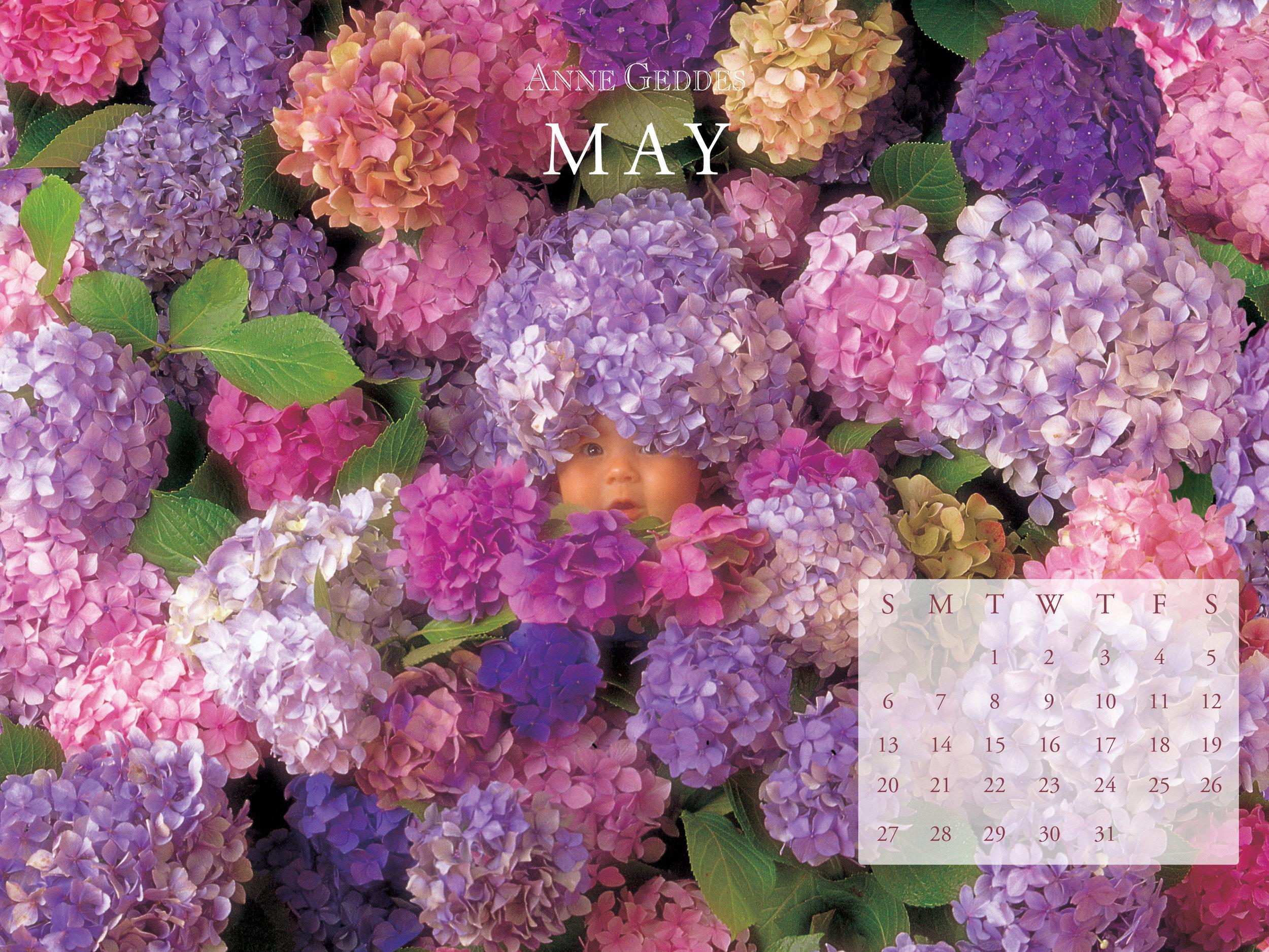 May800x600.jpg