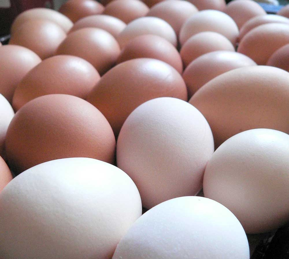 chicken-eggs.jpg