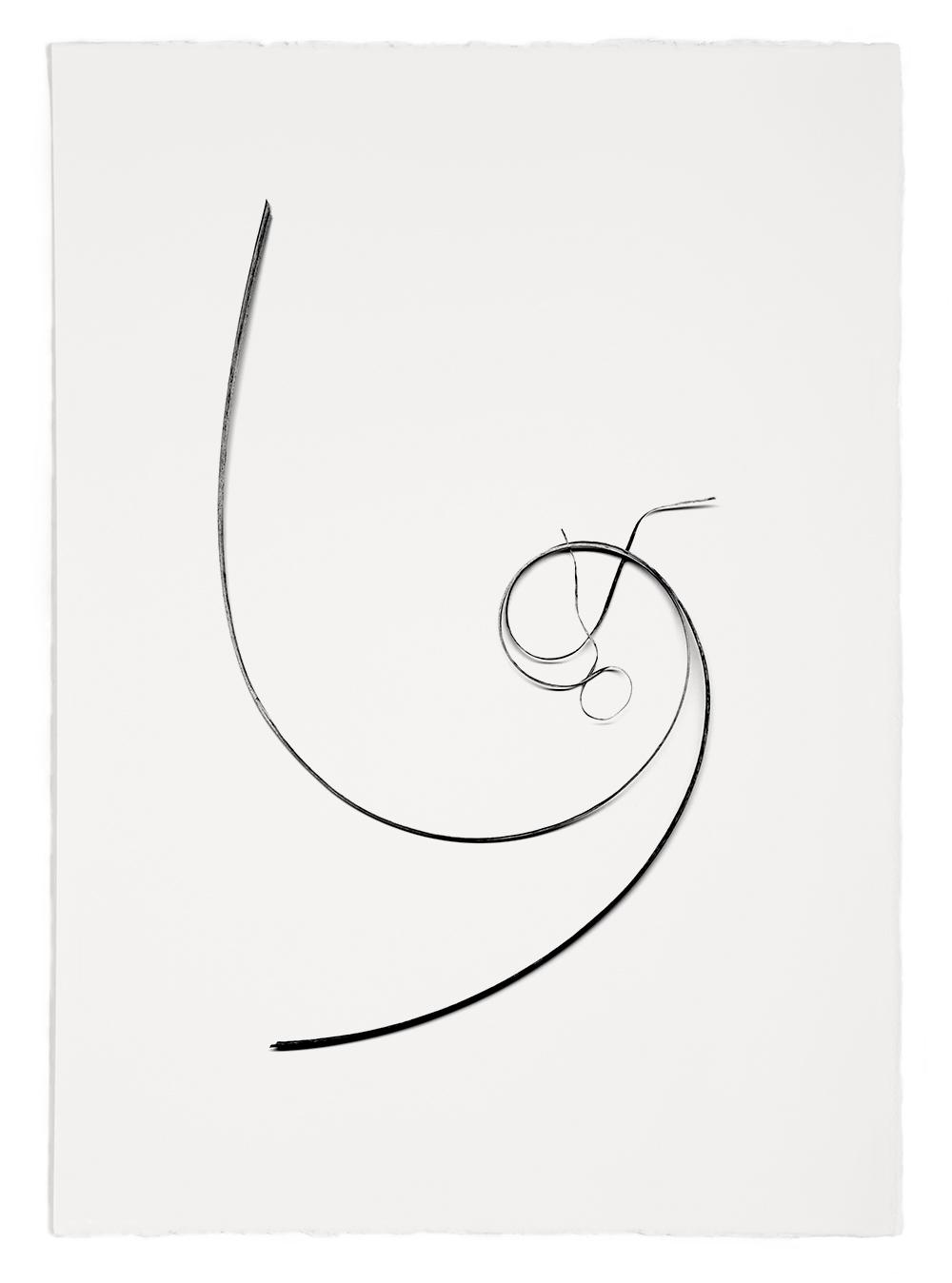 "Blades of Grass #42  , inkjet print, 40 x 32"" 2003"