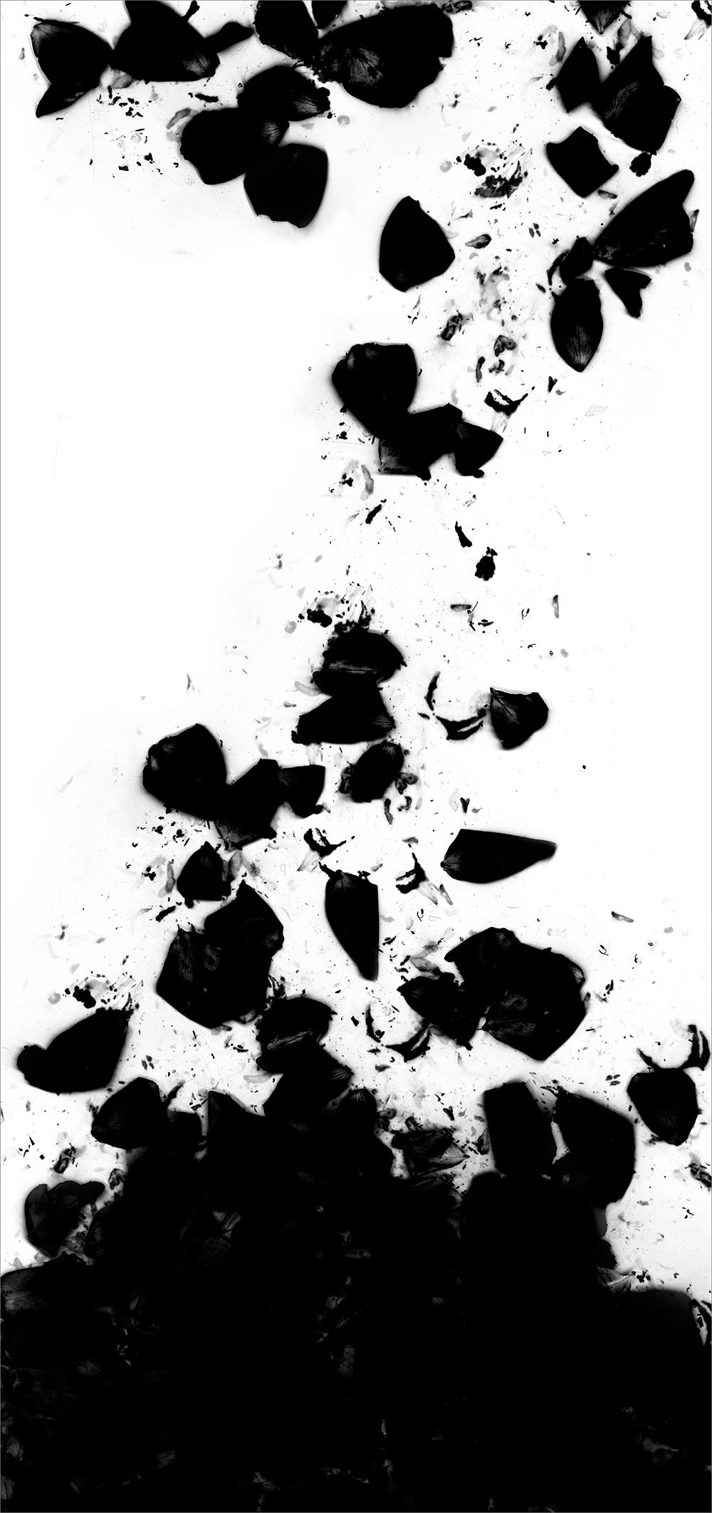 "#  8   inkjet print  , 90 x 44""  2009"