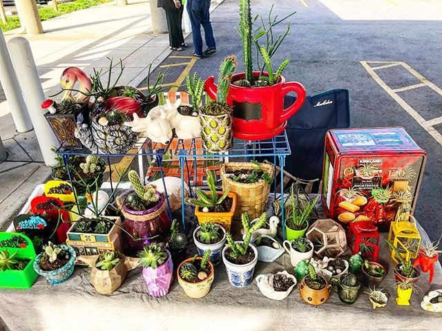 It's a beautiful day for the @nafarmersmkt Come out and visit! #farmersmarket #succulents #newalbany #sunshine #airplants