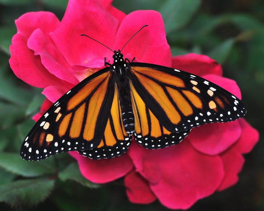 Butterfly release Louisville KY