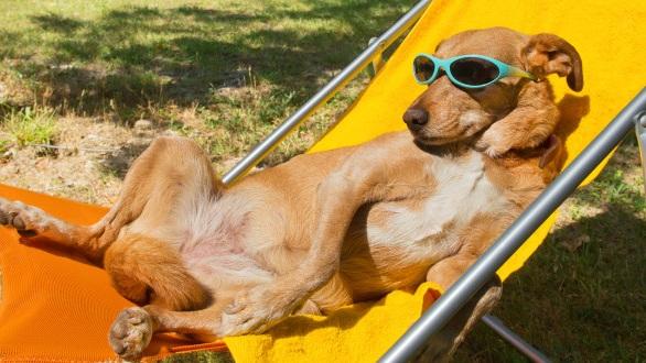 Hello Summer -