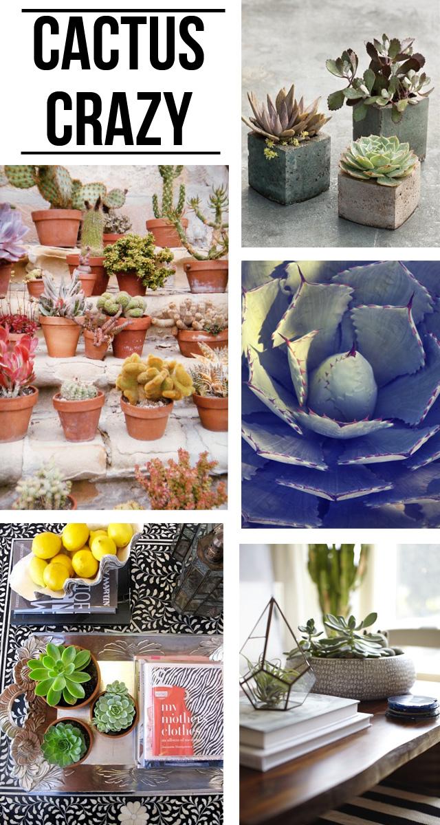 Succulent+Craze.jpg