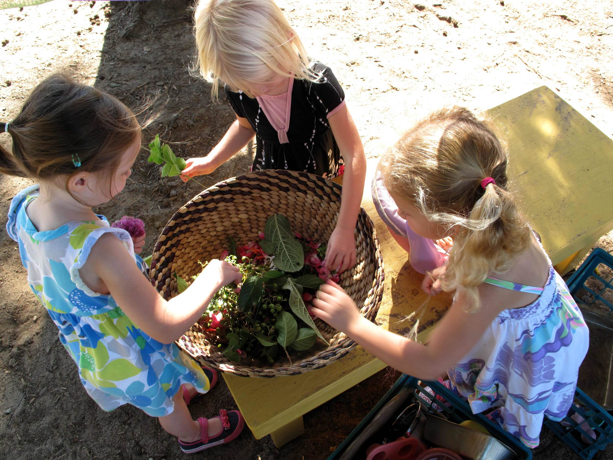Play and Learning Places  We design places where children can connect with nature.   Learn more