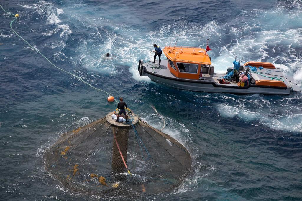 Investing in Open Ocean Aquaculture -