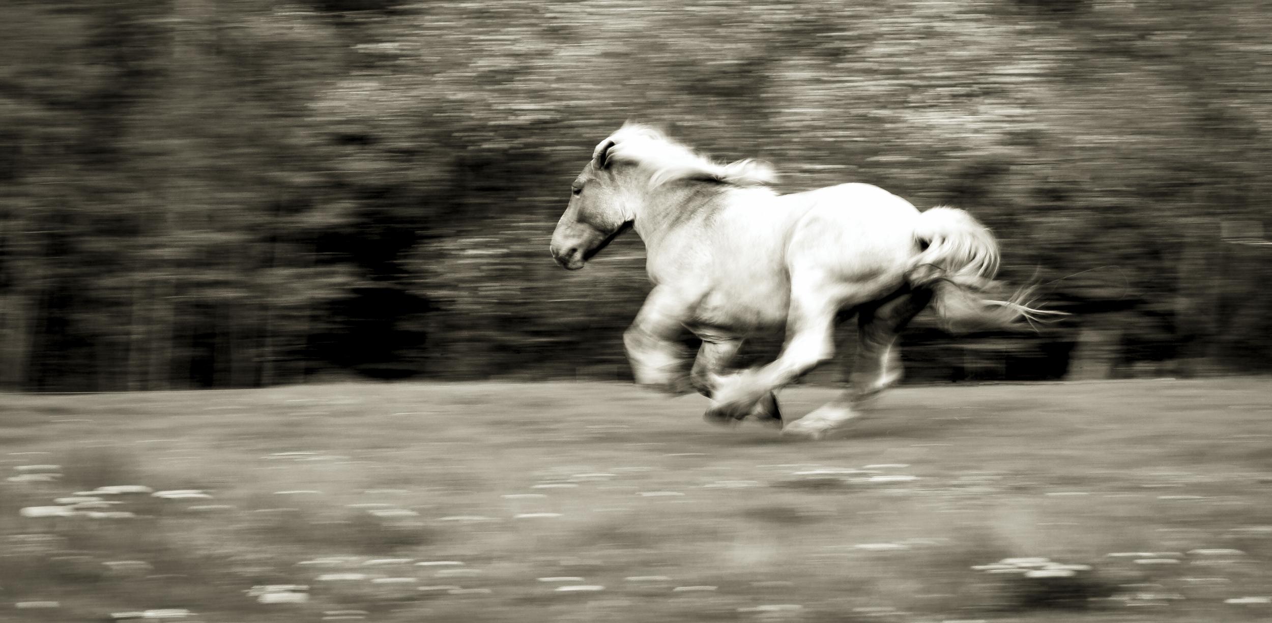 Ginger_Run_FB-862.jpg
