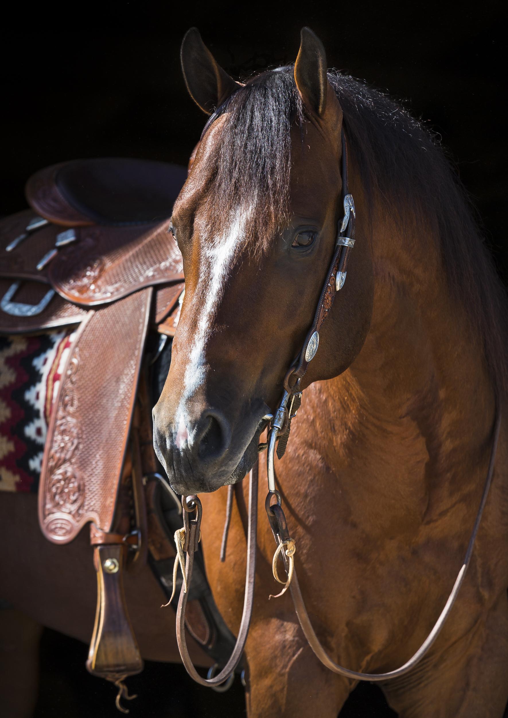 Horse-.jpg
