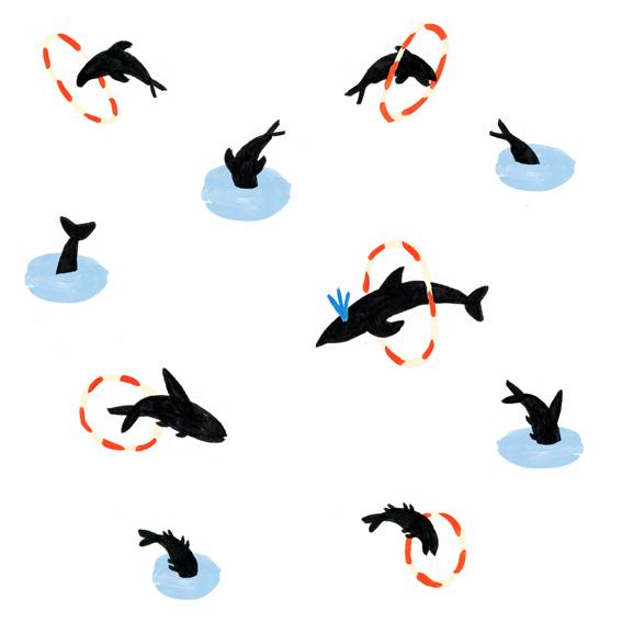 54_dauphins.jpg