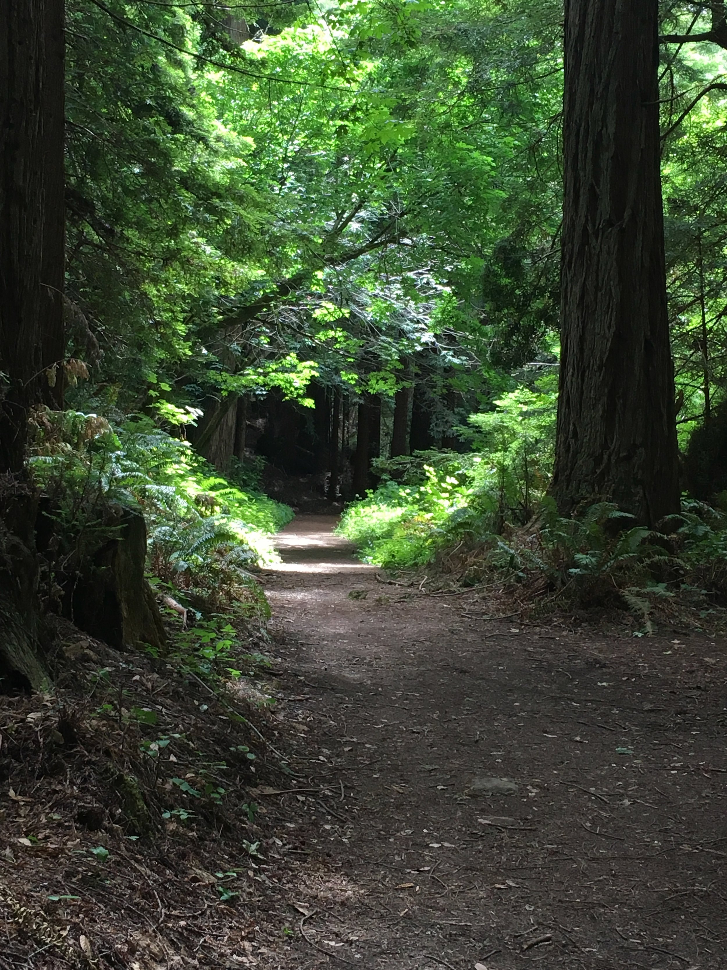 The healing redwoods welcome us to the trail with open arms.