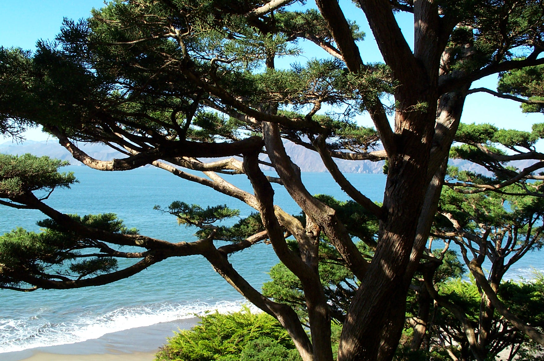 Bay Area Arborist Cooperative Tree Consultation
