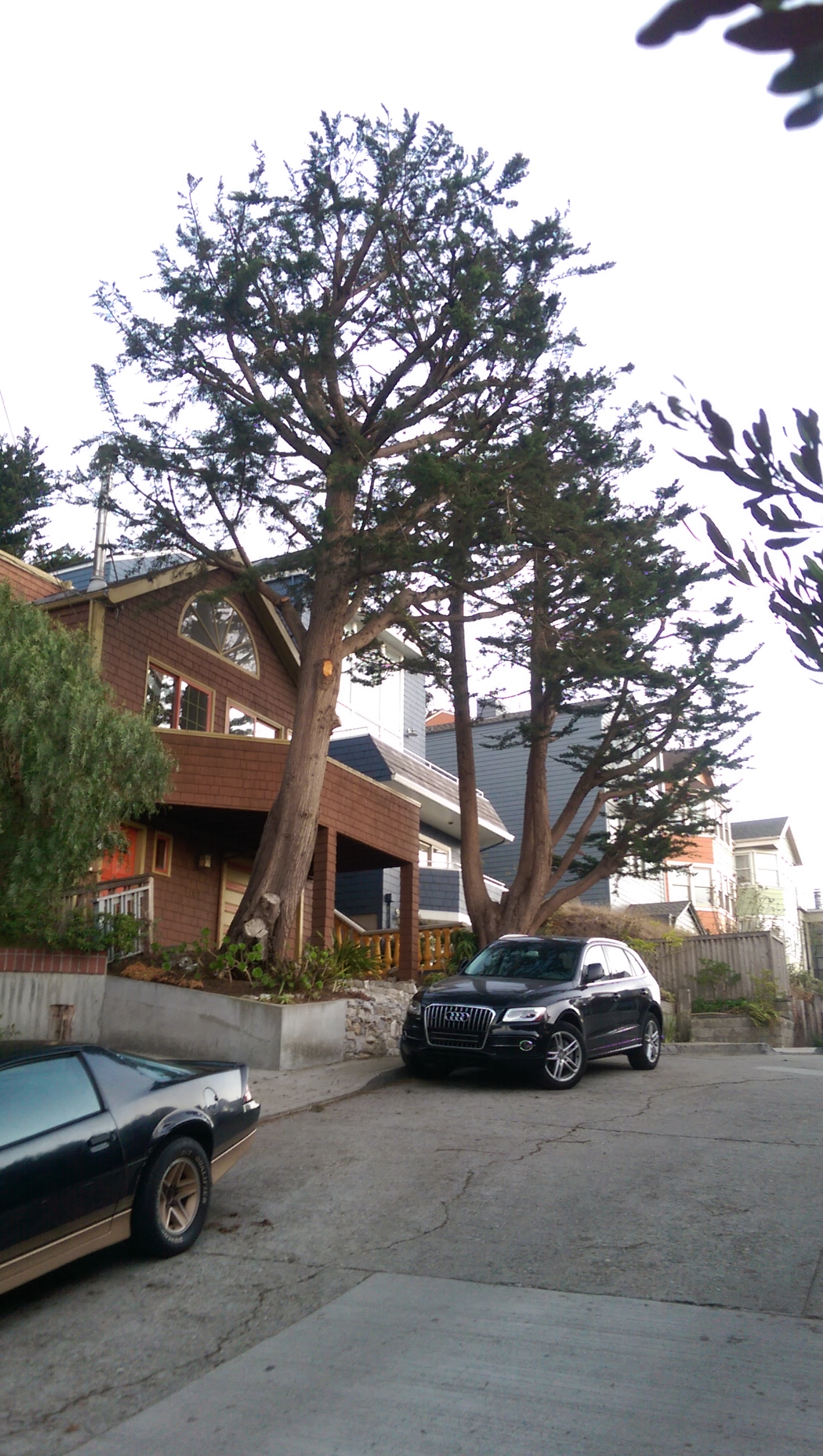 Bay Area Arborist Cooperative Tree Planting