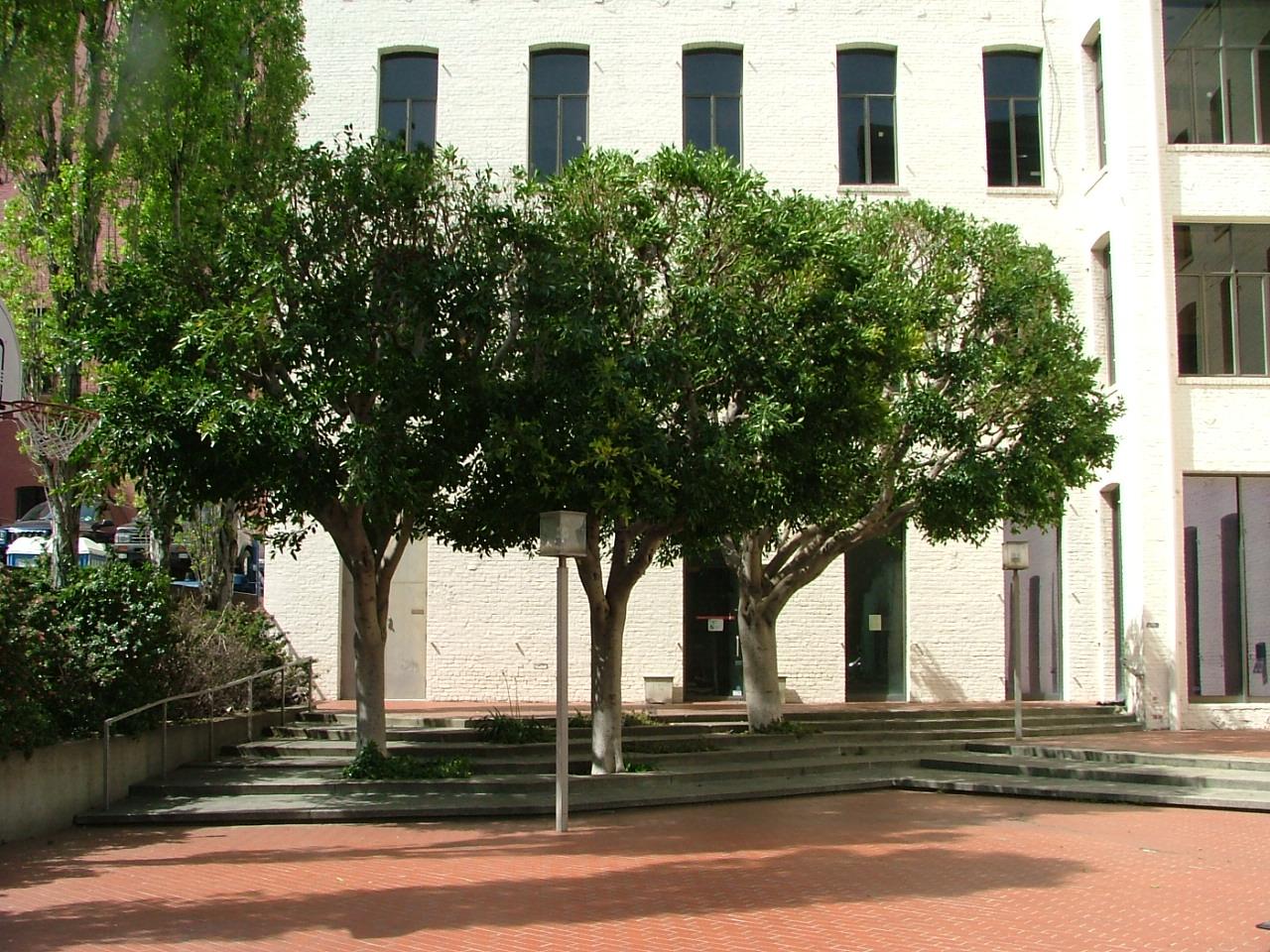 Bay Area Arborist Cooperative Tree Pruning