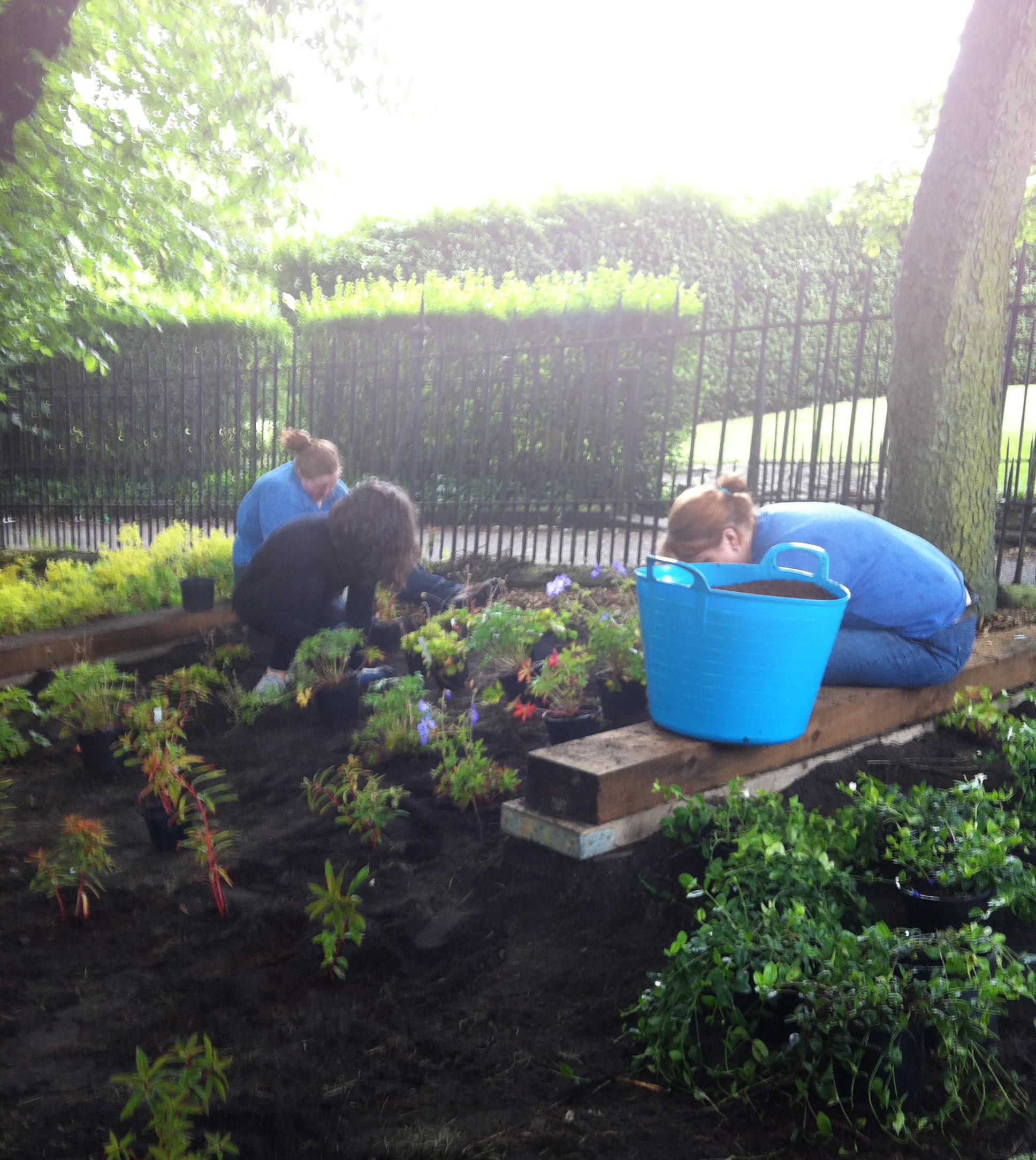 160715_Planting day 2.JPG