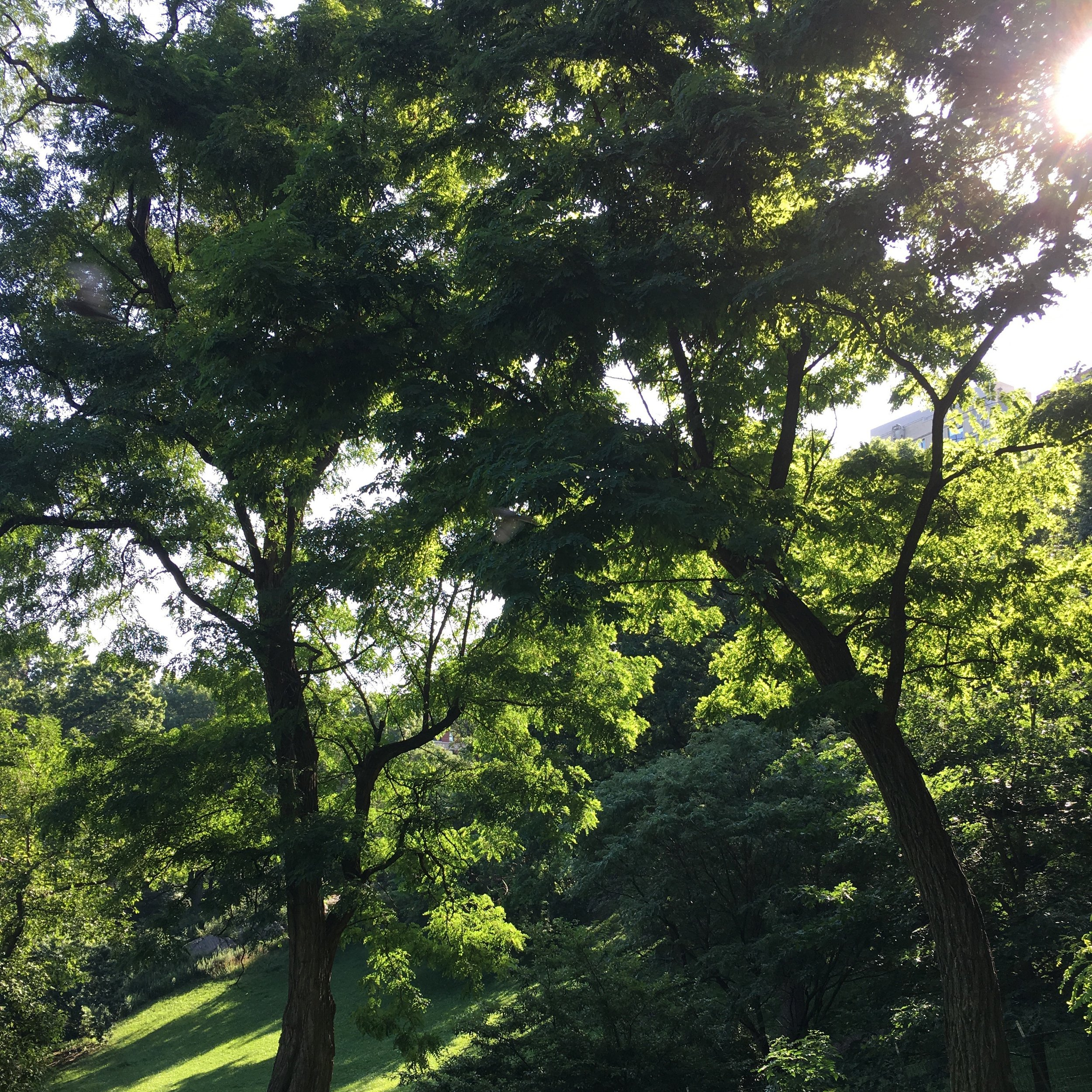 Just a typical insanely gorgeous morning in the Park.  New York City can look like this in the summer.