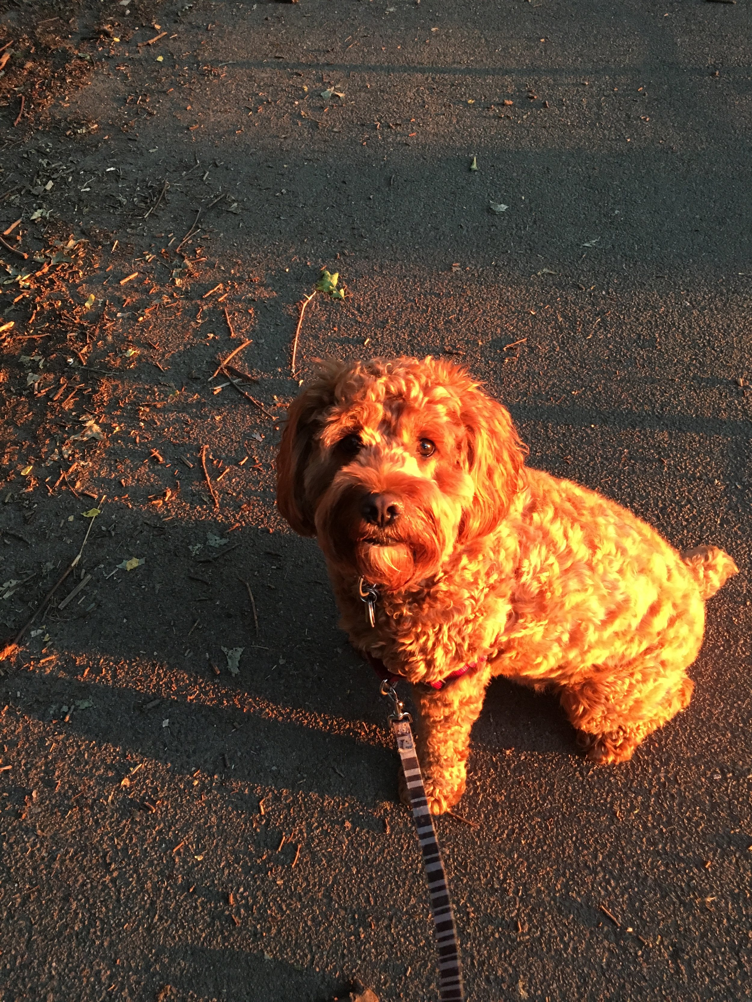 Golden light of a summer sunset, our Chief Morale Officer couldn't care less... but hey he looks really sweet.