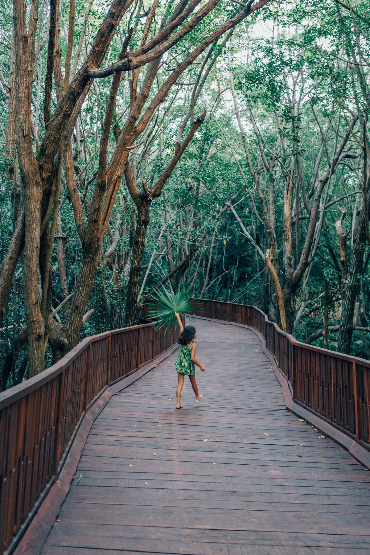 Jungle Walk at  Azul Fives , Playa del Carmen, Mexico