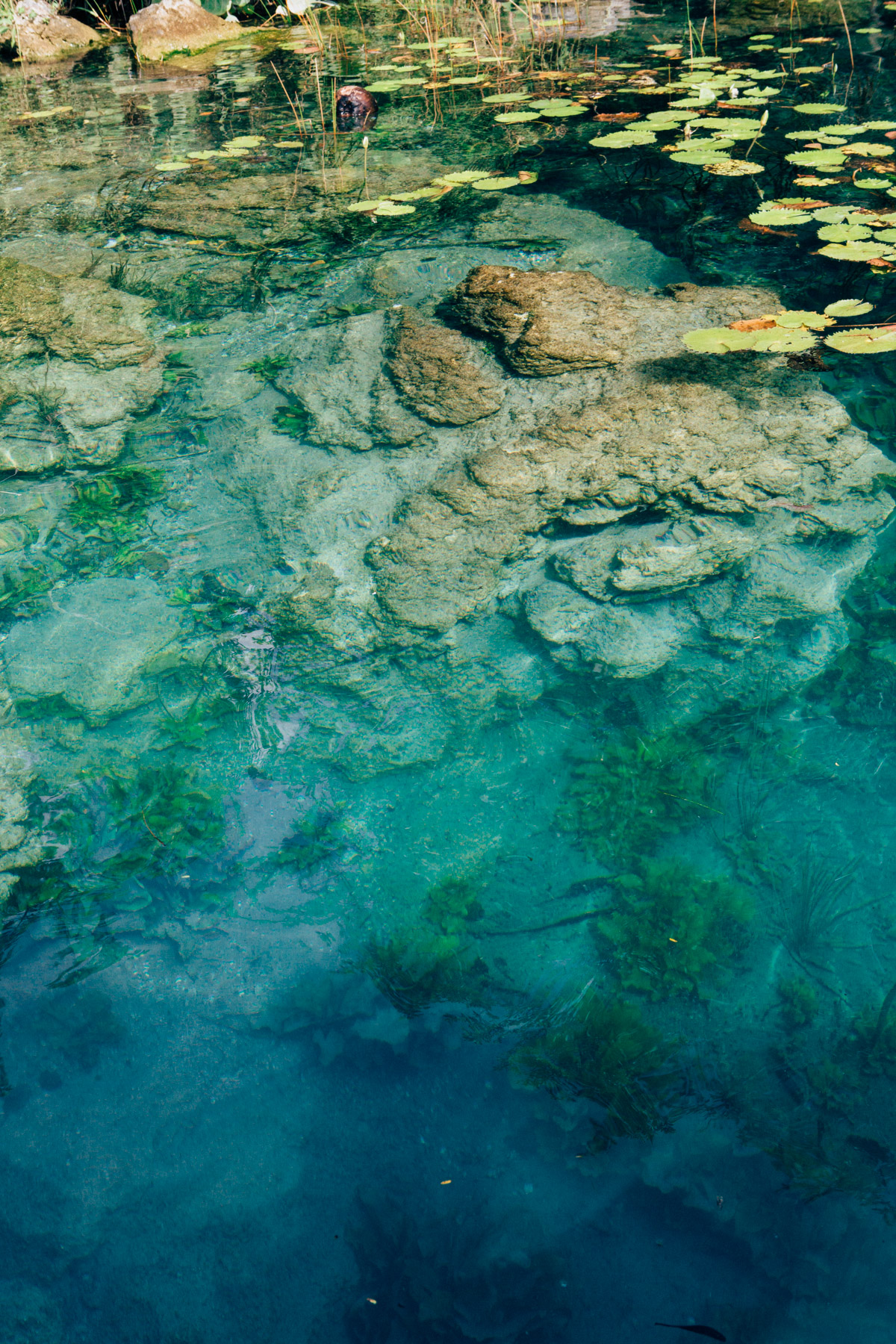 Clear Water of the Cenote at Bacalar, Mexico
