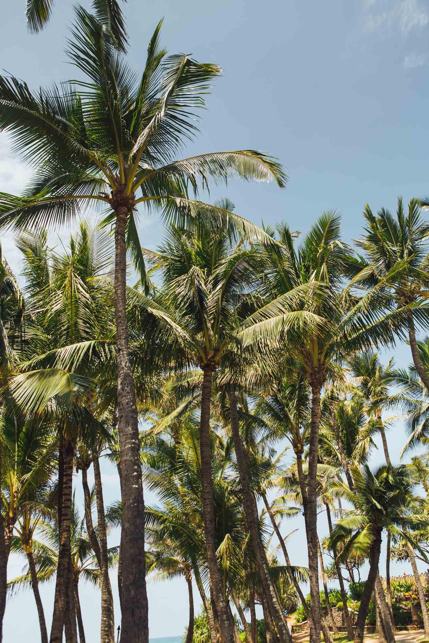 Hana, Maui, by Madeline Lu-1.jpg