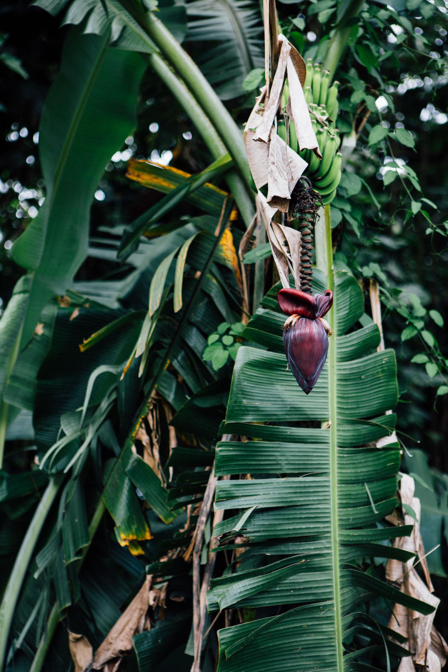 Hana, Maui, by Madeline Lu-29.jpg