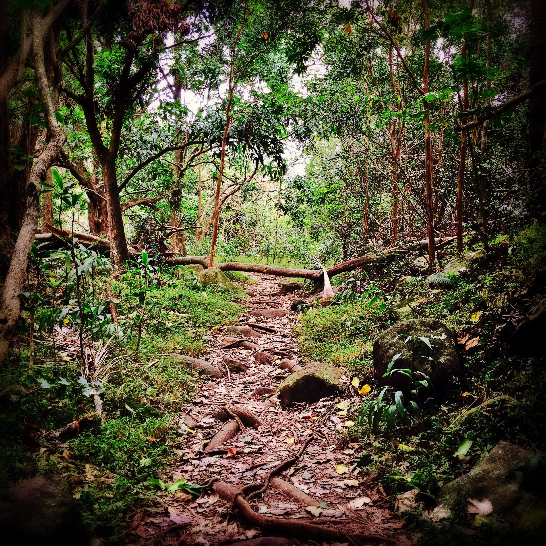 The forbidden path at I'ao Valley