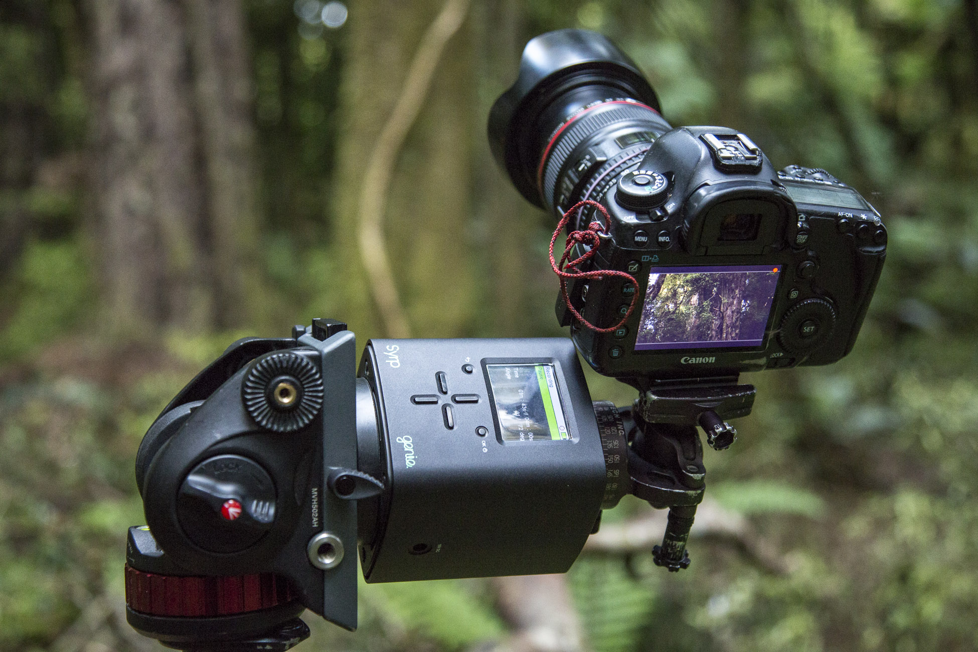 Cutting-edge photography set ups were used to capture never-seen-before forest images.jpg