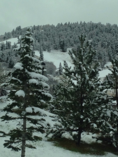 The snow covered trees!