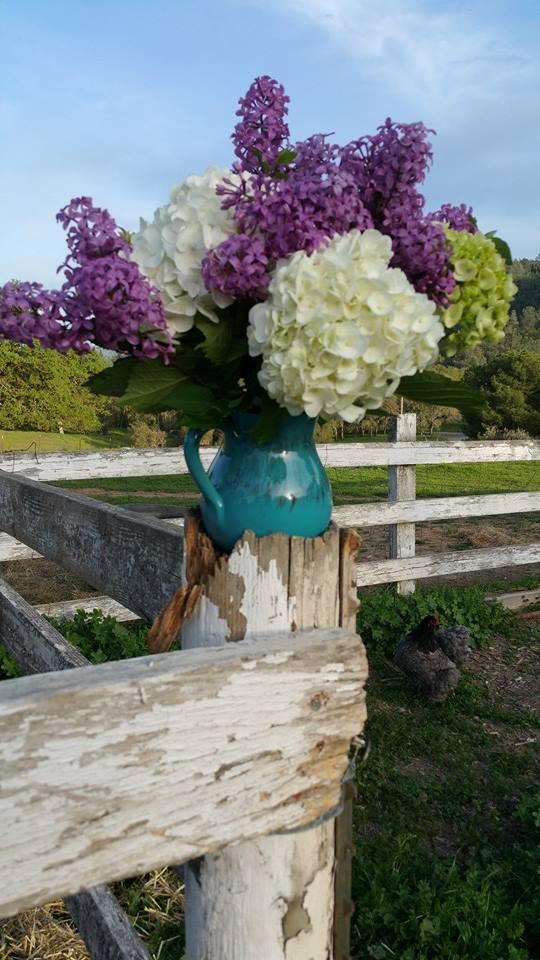 hydrangea vase_me.jpg