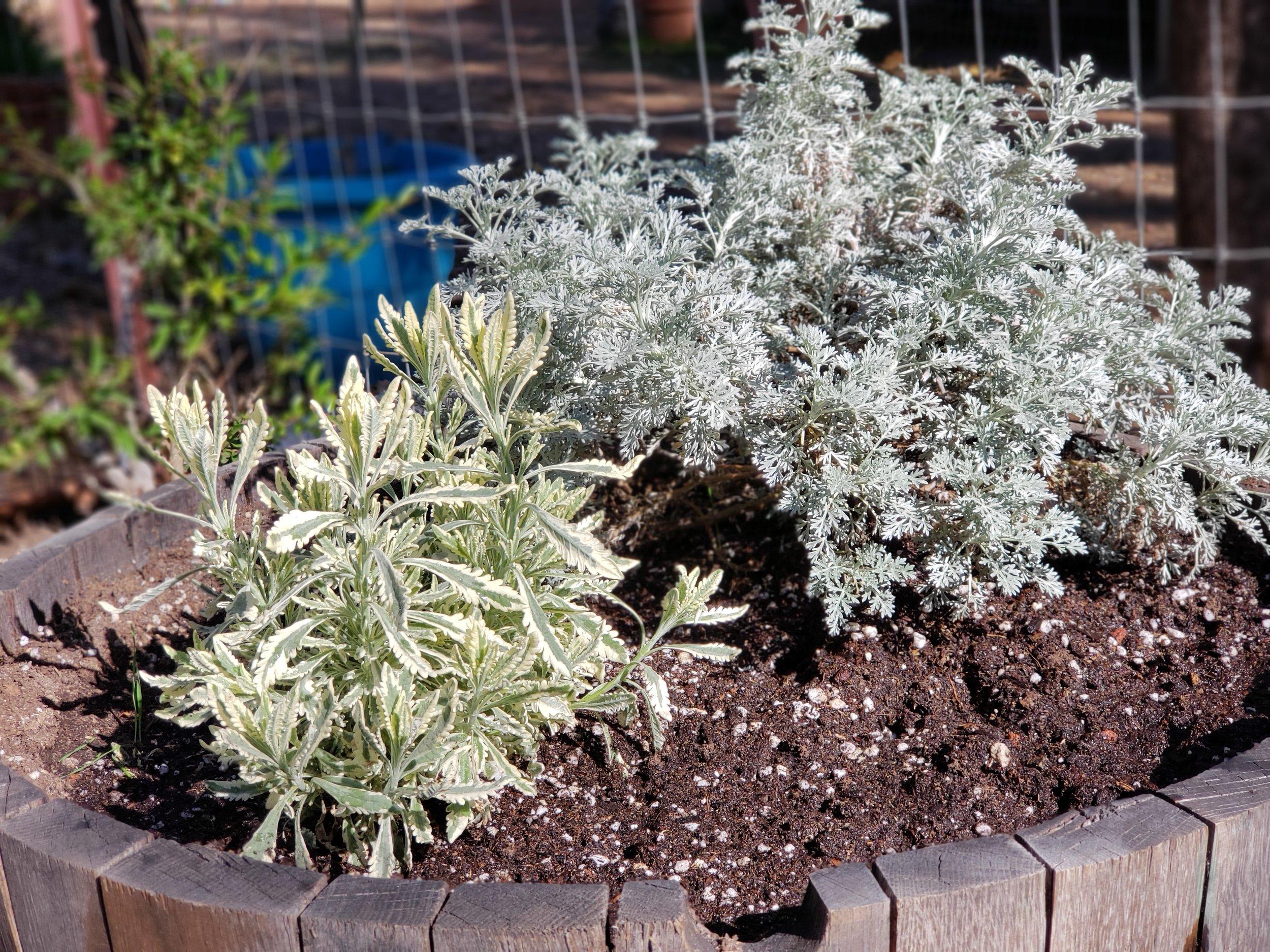 SS soil pot.jpg
