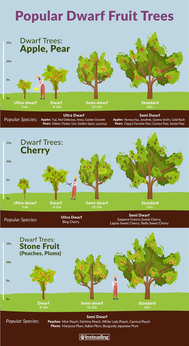 dwarf tree image.png