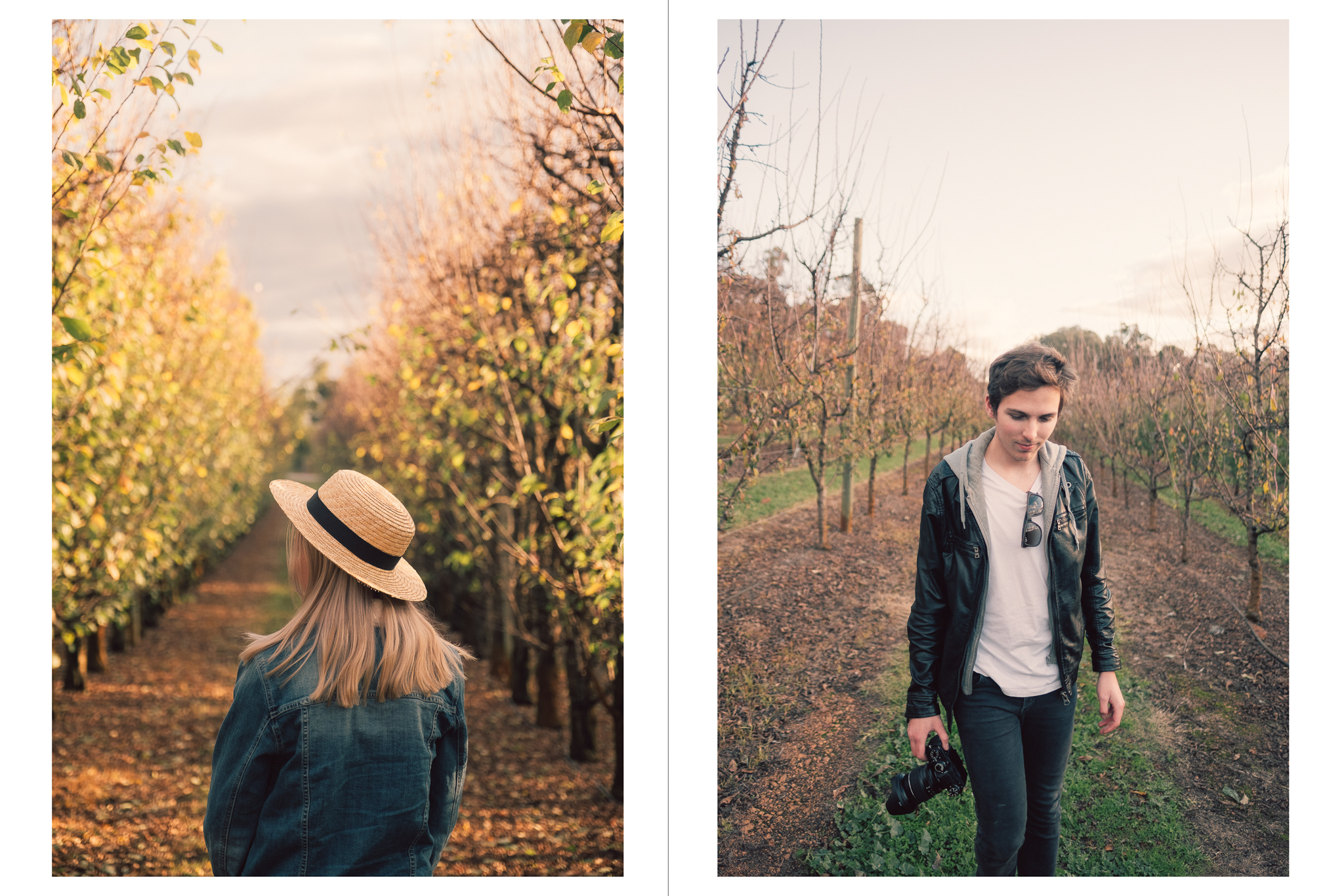 Orchard Editorial