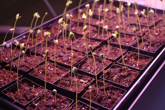 The Critical Arts Ensemble: Watching plants grow (literally)
