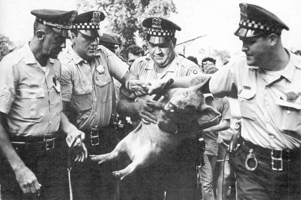 Presidential Candidate Pigasus, a decent pig, among some monstrous pigs.