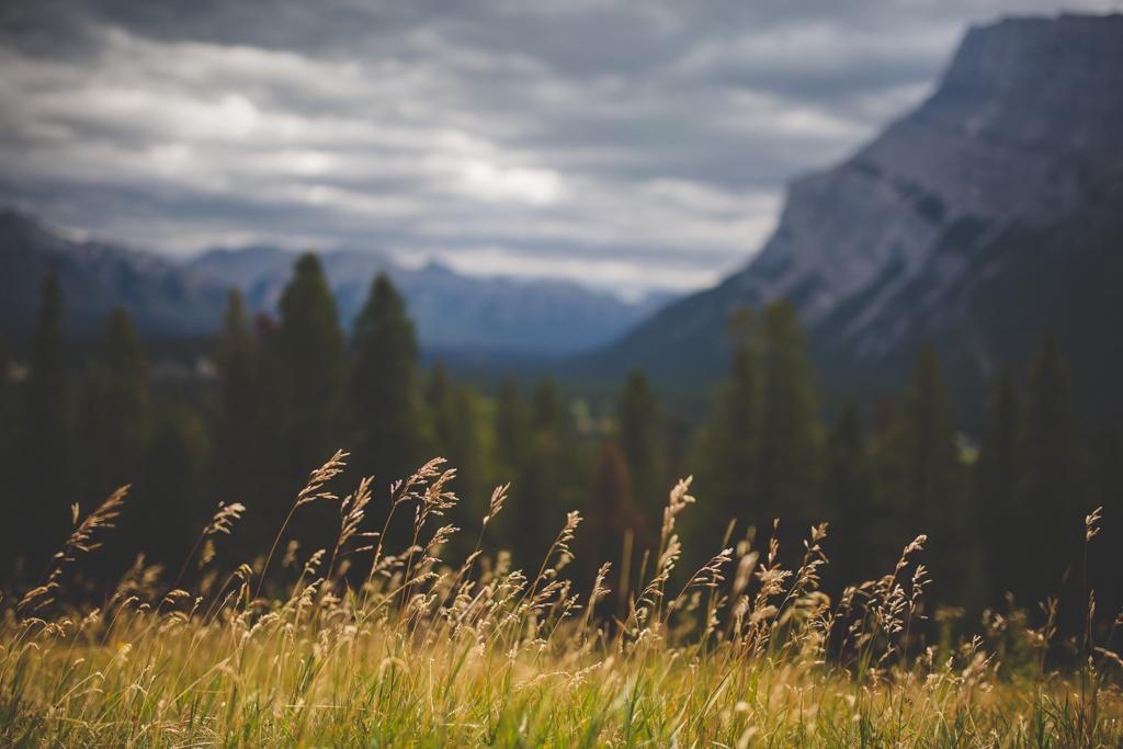 BanffWeddingPhotographer-9.jpg